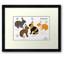 Rabbit colour genetics - Extension gene Framed Print