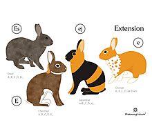 Rabbit colour genetics - Extension gene Photographic Print