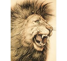 lion, king of cats Photographic Print
