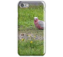 GALAHS iPhone Case/Skin