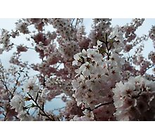 Love for Spring Photographic Print