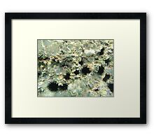 Diving (sea urchins) Framed Print