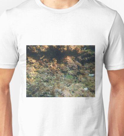 Diving (Fish) Unisex T-Shirt