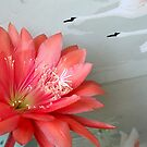 Cactus Flower In A Swan Dive by Michael May