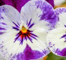 violet in the garden Sticker