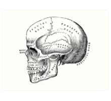 Vintage scientific illustration | Skull Art Print