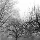 12.3.2016: Oak and Apple Trees by Petri Volanen