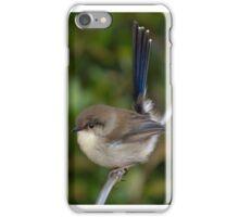 Superb Fairy Wren iPhone Case/Skin