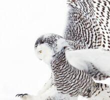Snowy Owl catching prey Sticker