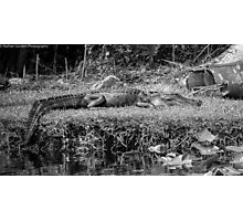 Alligator Rest Photographic Print