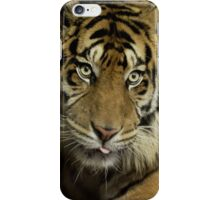 ......King of Cats ..  iPhone Case/Skin