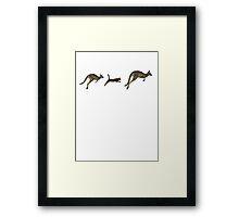 Three kangaroos? Framed Print