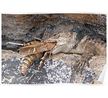 Crevice Lizard vs Grasshopper Poster