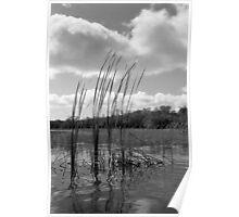 On 9-Mile Pond Poster