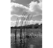 On 9-Mile Pond Photographic Print