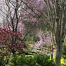 Almost Noon with Plum Blossoms in Japanese Garden by TerrillWelch