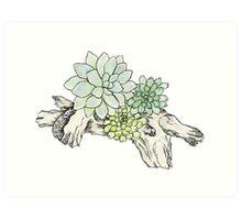 Driftwood Succulents 2 Art Print