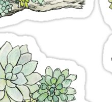 Driftwood Succulents 3 Sticker