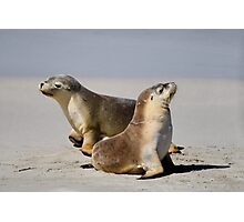 Seal Pups Photographic Print