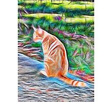 Orange cat sitting on a path in rural Queensland, Australia Photographic Print