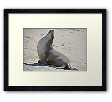 Yoga seal Framed Print