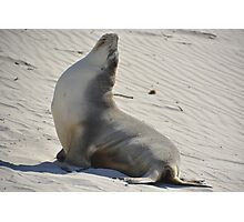 Yoga seal Photographic Print