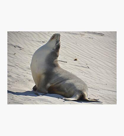Yoga seal Photographic Print