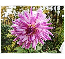 Beautiful pink flower digital color pencil sketch. Poster