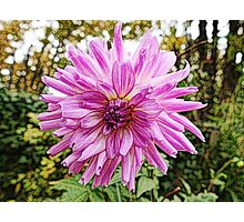 Beautiful pink flower digital color pencil sketch. Photographic Print