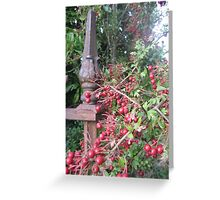 Hawthorns in Deloraine Greeting Card