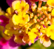 Multicoloured flowers Sticker