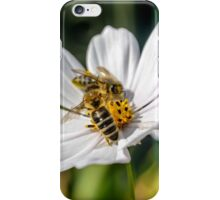 Garden Cosmos iPhone Case/Skin