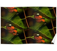 Abstract butterfly fun time Poster