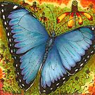 Blue Morpho Butterfly by Catherine  Howell