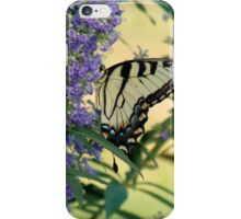 Tiger Swallowtail On Chaste Tree Number 2 iPhone Case/Skin