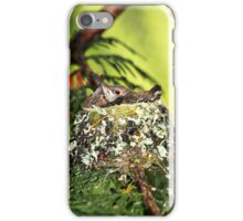 Baby Hummingbirds in the Nest iPhone Case/Skin