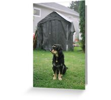 'Backyard' Greeting Card