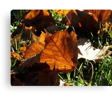 Fallen leaf Canvas Print