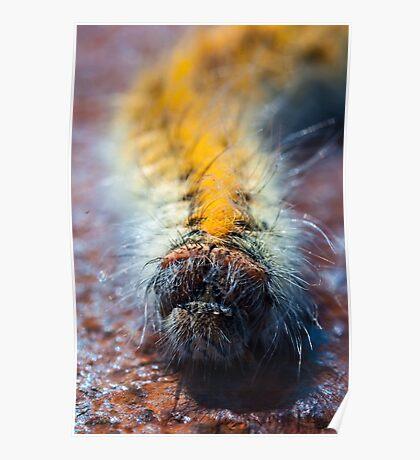 The Sea Caterpillar Poster