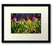 Spring Shopping Underfoot Framed Print