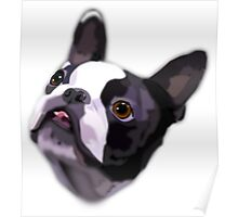Boston Terrier - French Bull dog Poster