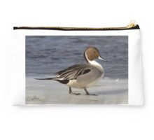 Northern Pintail (male in breeding plumage) Studio Pouch