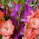 Happy Glads by John Butler