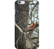 Cardinal Sitting In The Tree iPhone Case/Skin