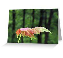 Spring Maple leaf Greeting Card