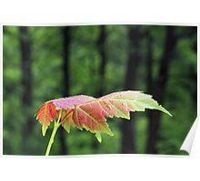 Spring Maple leaf Poster