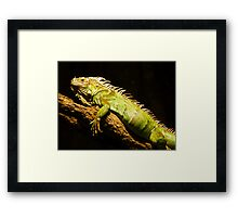 Green Iguana Framed Print