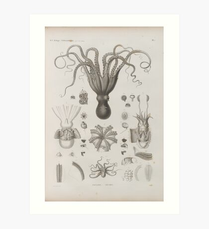 Vintage Cephalopod Zoological Diagram Art Print