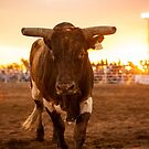 Close Encounter of the Bovine Kind by Natalie Ord