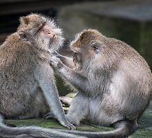Ubud Monkey Mates by JohnKarmouche